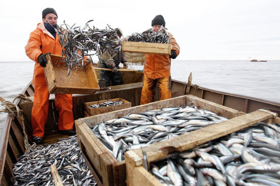 налоги и сборы на рыбную ловлю